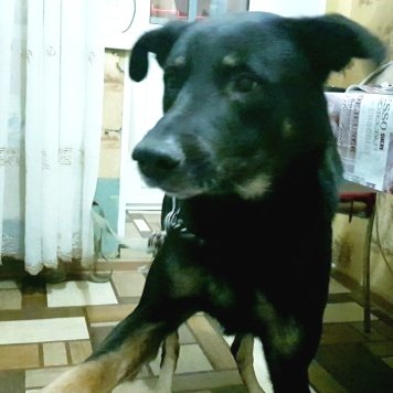 Зик - Собаки в добрые руки