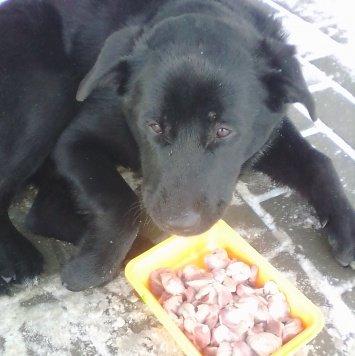Баксик - Найденные собаки