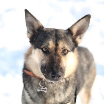 Альмалексия (Лекси) - Собаки в добрые руки