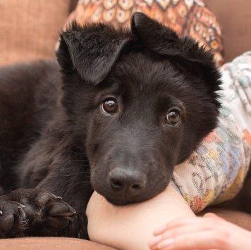 Муха - Собаки в добрые руки
