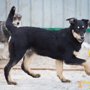 Сид! - Собаки в добрые руки