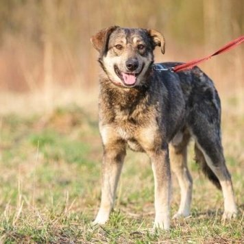 Канзас - Собаки в добрые руки