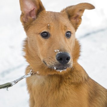 Улана - Собаки в добрые руки