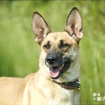 Агуша - Собаки в добрые руки