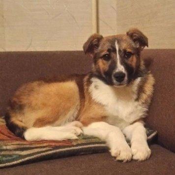 Алиша - Собаки в добрые руки