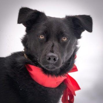 Юла - Собаки в добрые руки