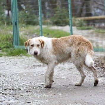 Артур - Собаки в добрые руки