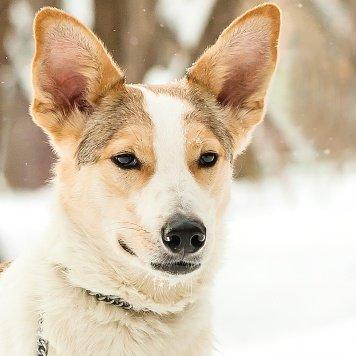 Ланс - Собаки в добрые руки