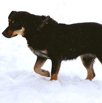 Мара - Собаки в добрые руки