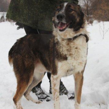 Анри - Собаки в добрые руки
