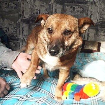 Брутти - Собаки в добрые руки