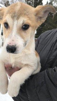 Элли - Собаки в добрые руки