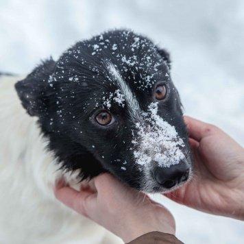 Ника - Собаки в добрые руки