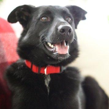 Чезария - Собаки в добрые руки