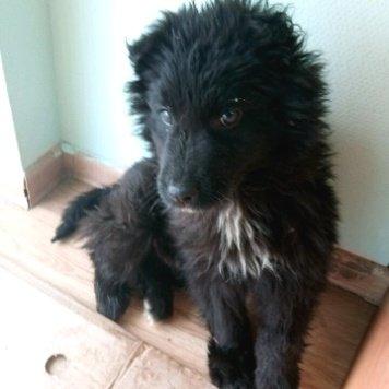 Черныш - Найденные собаки