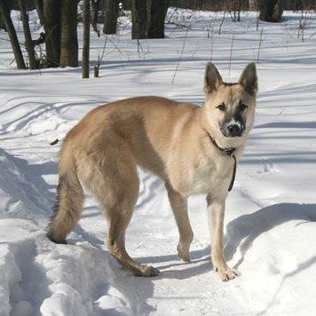 Алмаз - Собаки в добрые руки