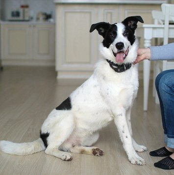 Атос - Собаки в добрые руки