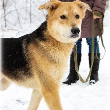 Непал - Собаки в добрые руки