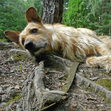 Людвиг - Собаки в добрые руки