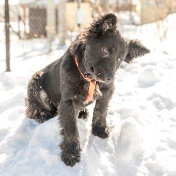 Мун - Собаки в добрые руки