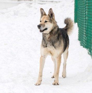 Гир - Собаки в добрые руки