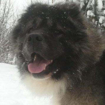 Антонио - Собаки в добрые руки