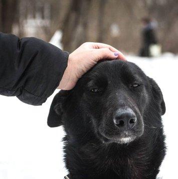Трикси - Собаки в добрые руки