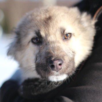 Снежка - Собаки в добрые руки