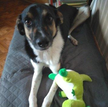 Тобби - Собаки в добрые руки