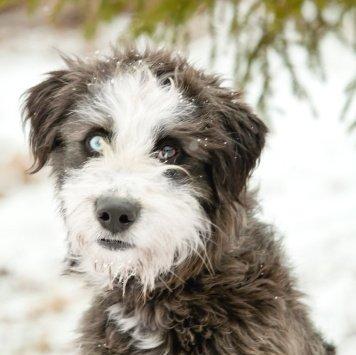 Ванечка - Собаки в добрые руки