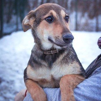Мелисса - Собаки в добрые руки
