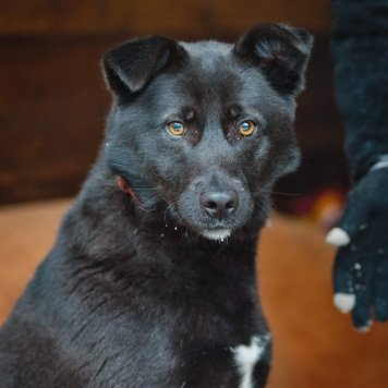 Лаура - Собаки в добрые руки