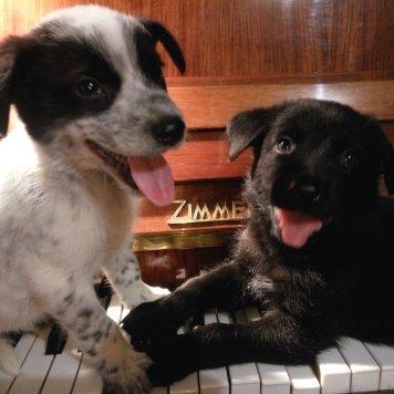 Музыка Души - Собаки в добрые руки