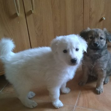 Щенки белые и чёрные - Собаки в добрые руки