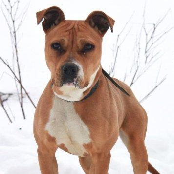 Звездочка - Собаки в добрые руки