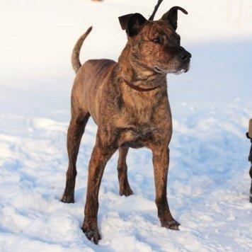 Митрофан - Найденные собаки
