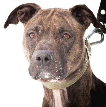 Талия - Собаки в добрые руки