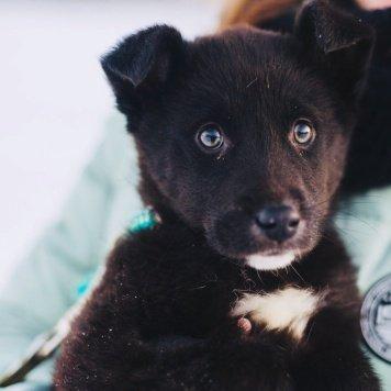 Найт и Найда - Собаки в добрые руки