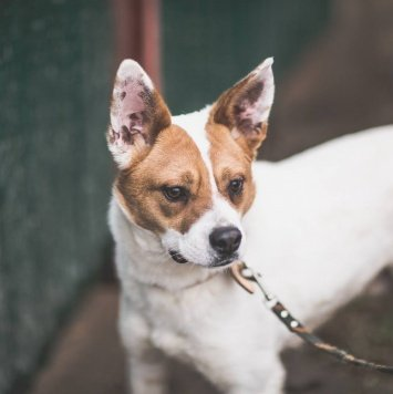 Апполо - Собаки в добрые руки