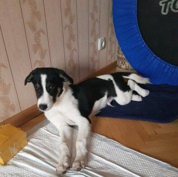 Марвелос (Марви) - Собаки в добрые руки