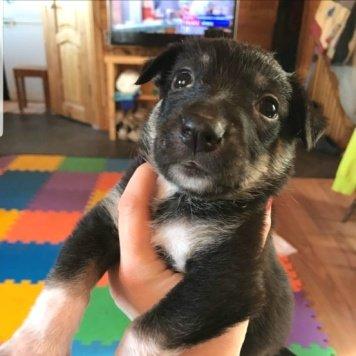 Адель и Борискин - Собаки в добрые руки