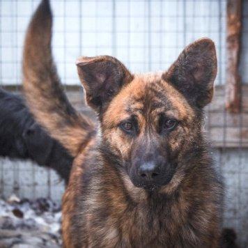 Жека - Собаки в добрые руки
