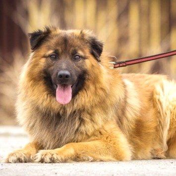 Рома - Собаки в добрые руки
