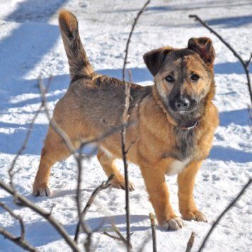 Санди - Собаки в добрые руки