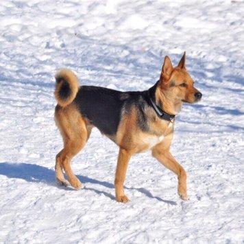 Лейси - Собаки в добрые руки