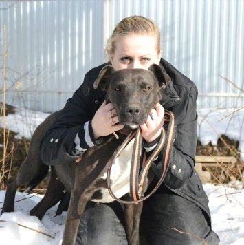 Тора - Собаки в добрые руки