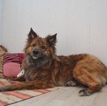 Дора - Собаки в добрые руки