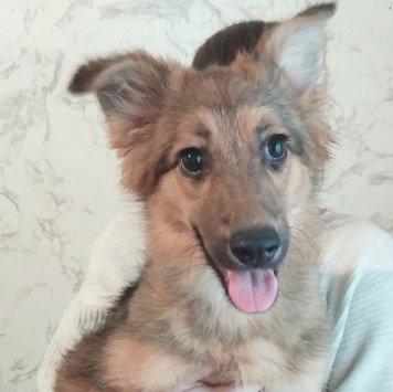 Вирра - Собаки в добрые руки