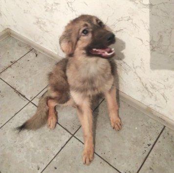 Вейла - Собаки в добрые руки