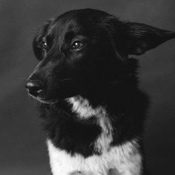 Мушка - Собаки в добрые руки